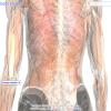 [Google] Istražite ljudsko telo